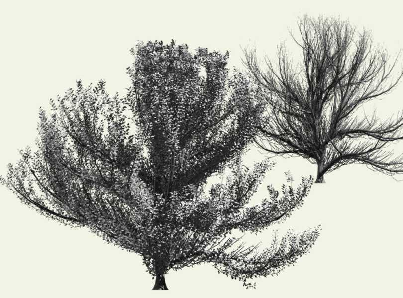 Arbaro - tree generation for povray