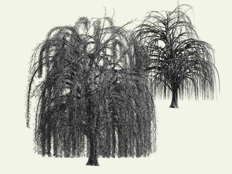 Weeping Willow 2011